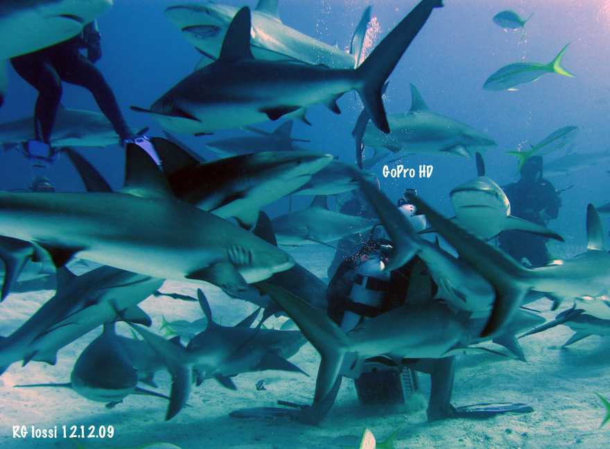 gopro shark shot.jpg