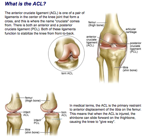1 acl.png